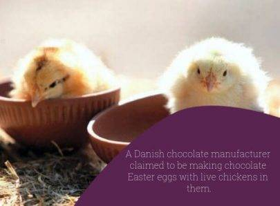 Easter eggs with chickens - Danish April Fool's Pranks